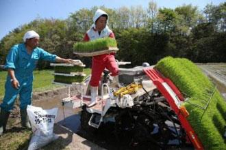 Fukushima Bowl