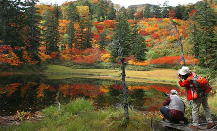 Autumn Reflection: A spectacular display of fall colors entrance Japanese nature lovers.